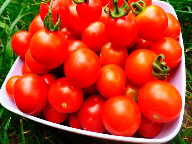 Как подбирать томаты