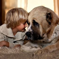 ребенок с большим псом животное