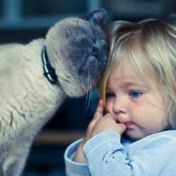 Как кошки на самом деле относятся к человеку