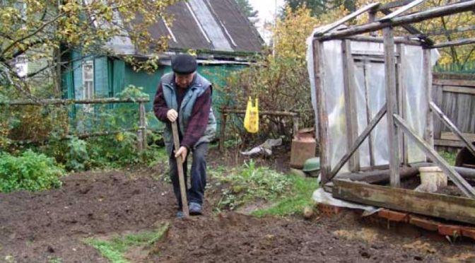 Копать или не копать участок осенью