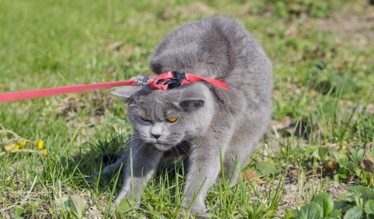 О новом законе обращения с животными