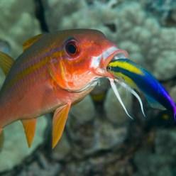 У аквариумных рыбок обнаружили признаки интеллекта, как у шимпанзе