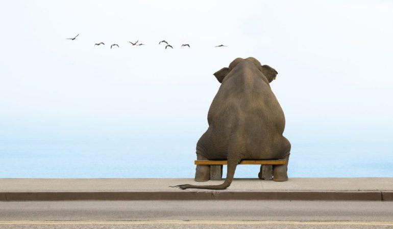 Почему некоторые животные предпочитают отдыхать стоя