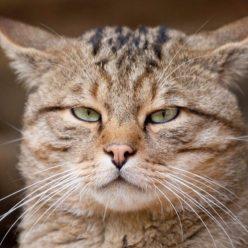 Понимают ли кошки, что их зовут по имени