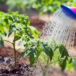 Как правильно подкармливать растения в июне