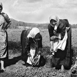 Как русские использовали картошку при Петре I