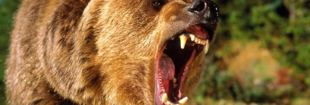 Основные причины нападения медведей на людей