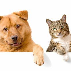 Почему же люди помешаны на кошках и собаках