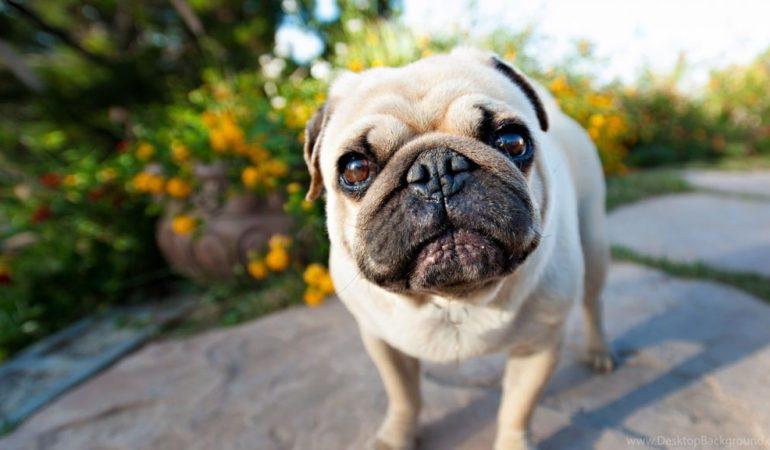 Чем отличается мозг разных пород собак