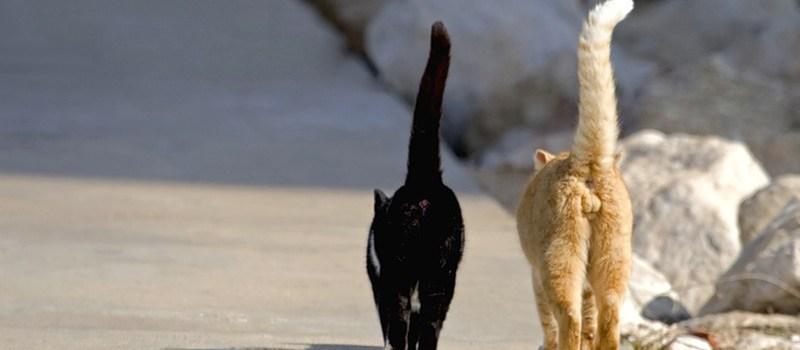 Кошка или кот ушли из дома