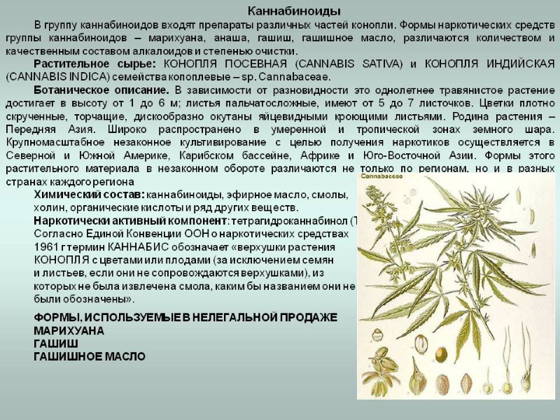 Вывод марихуану с чем мешают коноплю