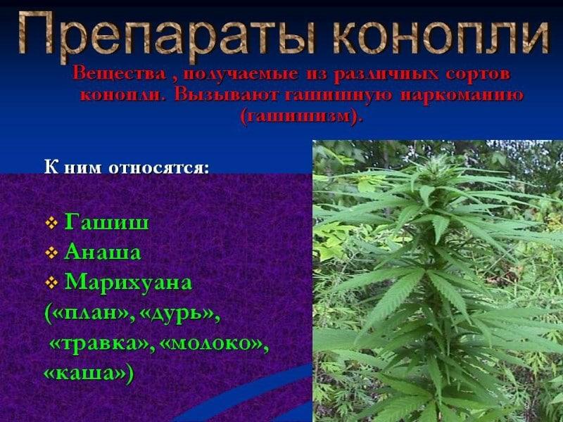 марихуана боли в