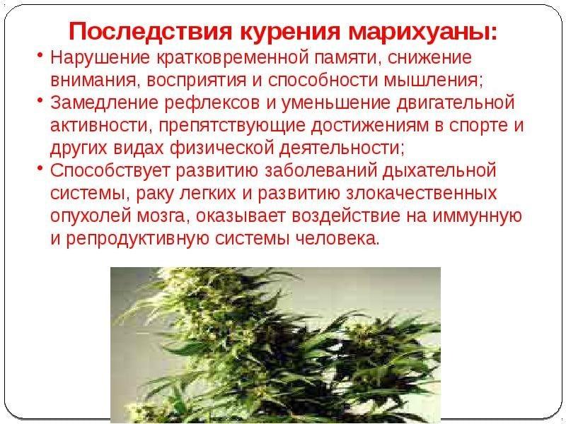 Признаки что человек курит марихуану не всходит конопля