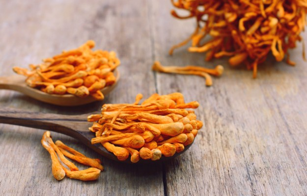 Cordyceps Mushroom | Must-Haves In Your Testosterone Supplement