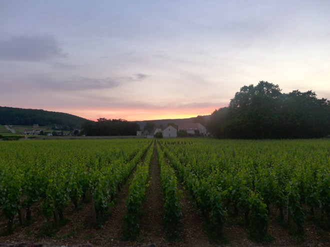 Sunset over Gevrey-Chambertin.