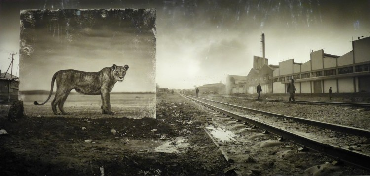 Nick Brandt's Inherit the Dust exhibition at Fotografiska.