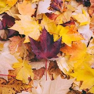Fall Offerings