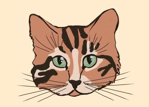 Ekspresi wajah Kucing