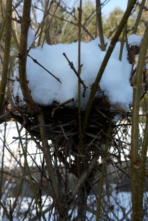 This nest really showed up with the pile of snow on it.