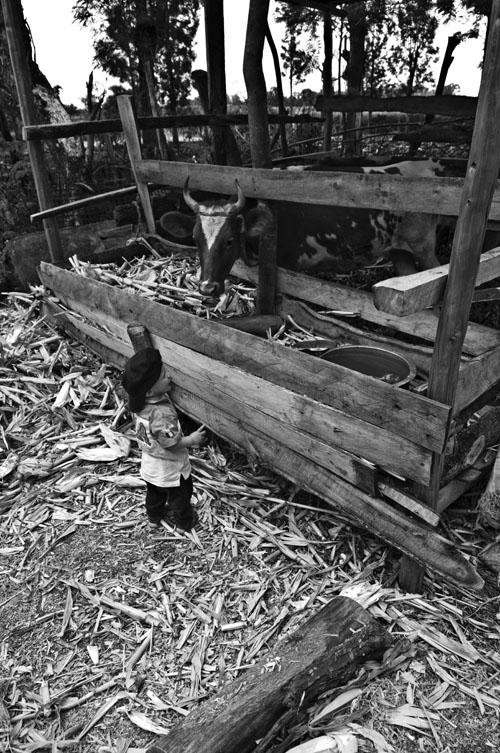 Lille Åsmund var ganske begeistra for kua på gården