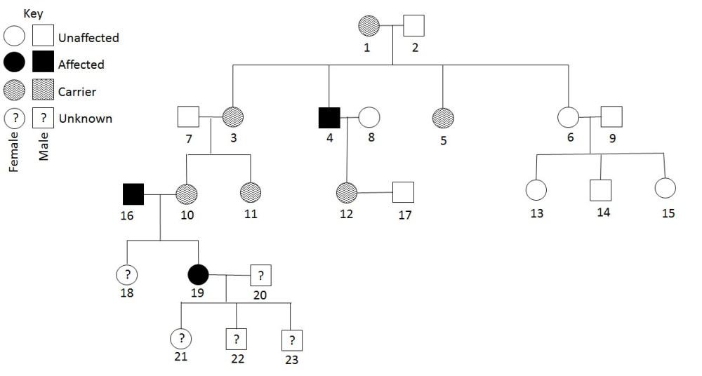 medium resolution of pedigree