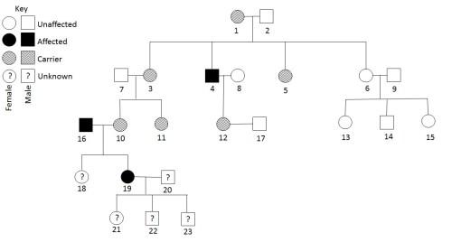small resolution of pedigree