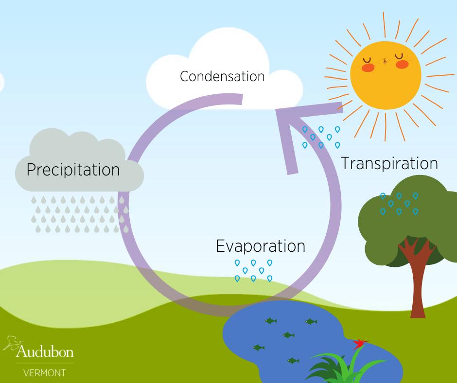 Diagram For Water Cycle Novocom Top