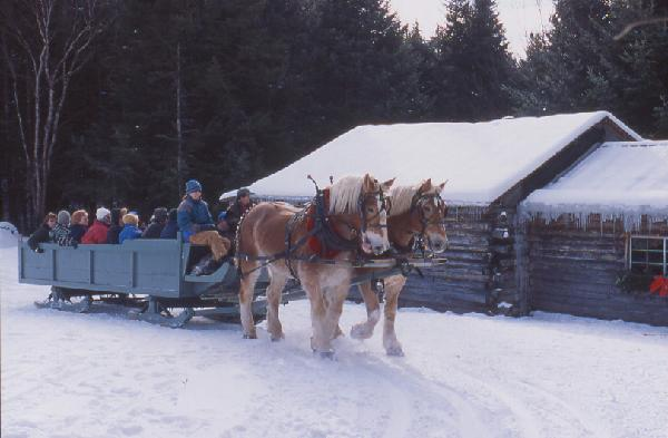 Sleigh Ride at Farmer Adams