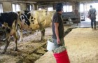 Mexican workersdo chores at a Vermont dairy farm.