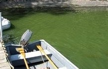 Blue-green algae blooms popping up on Lake Champlain
