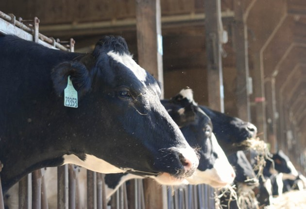 Call for new dairy model in Vermont sparks debate