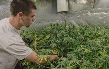 Marijuana legalization heads to House floor
