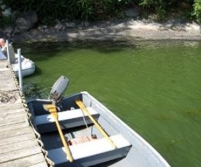 A blue-green algae bloom in St. Albans Bay. Photo courtesy of Gould Susslin