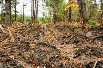 """Some of the roads should be smoothed out and seeded and some water bars put in,"" said Washington County Forester Russ Barrett. Photo by Hilary Niles/VTDigger"