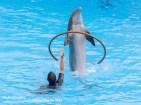 Dolfijnen show Loro Parque