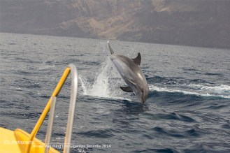 Jumping Dolphin in front of the boat