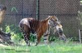 Moeder met jong Burgers'Zoo
