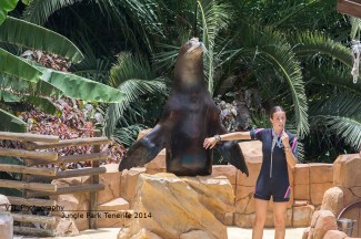 Jungle Park Sealion
