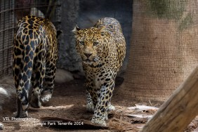 Leopards Jungle Park