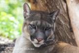 Puma Jungle Park