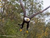 Landgoed Hoenderdaell Roofvogelshow (2)