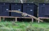 Roofvogel show Hoenderdaell