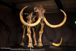 Mammoet Giants of the Ice Age Amsterdam EXPO
