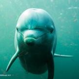 Dolfijntje