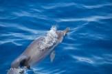 dolphin Los Gigantes