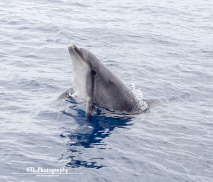 Jumping dolphin (3)