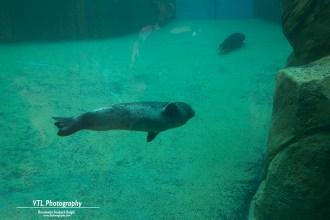 Zeehonden Boudewijn Seapark (2)