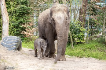 Moeder Indra met Yunha