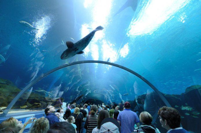 Watching fish can improve mental well-being. Photo of the Georgia Aquarium, the world s largest aquarium, in Atlanta, Georgia.