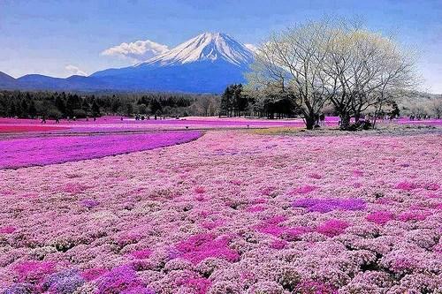 Resultado de imagen de monte fuji